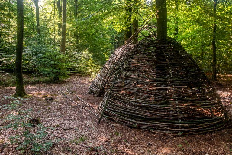 Wald-fuer-die-Seele-4