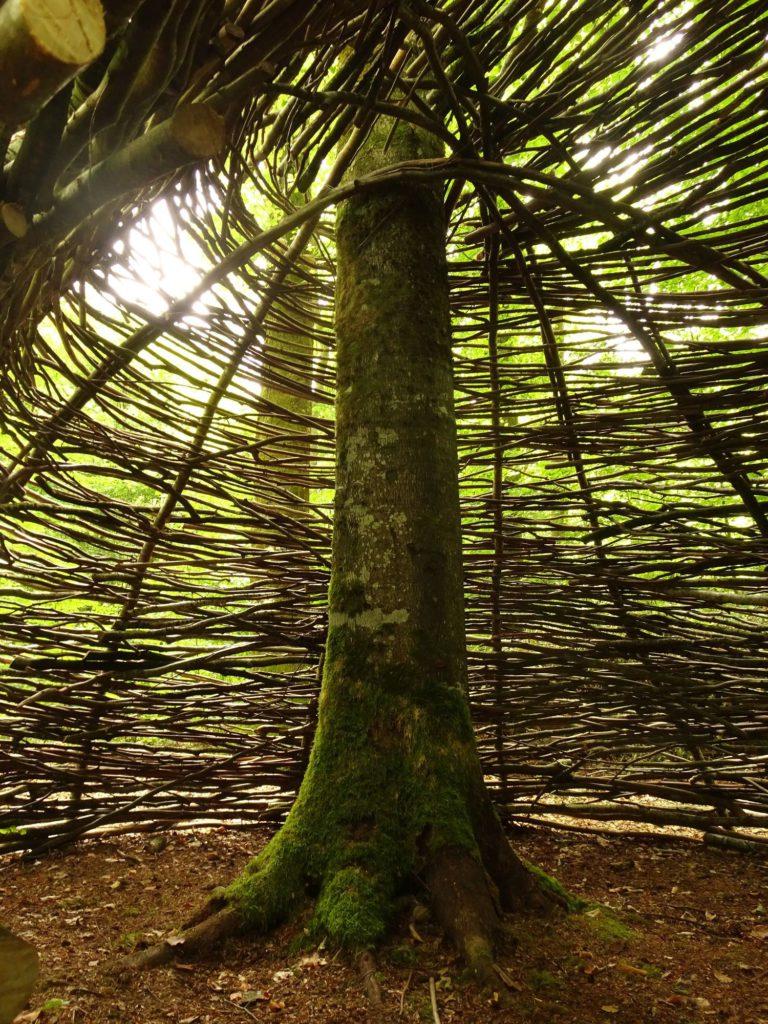Wald fuer die Seele Kinderseele2