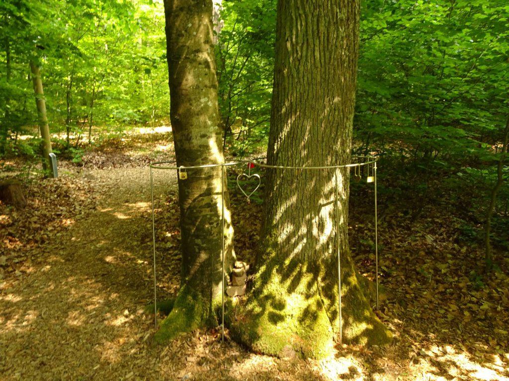 Wald fuer die Seele Liebesbaum