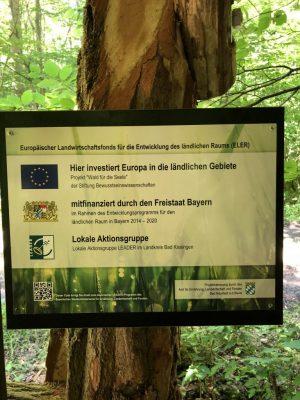 Wald für die Seele Konzept
